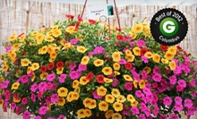 $15 for $30 Worth of Plants and Flowers at Foertmeyer &amp; Sons Greenhouse Co. 