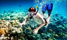 Lover's Cove Snorkeling Tour for Two or Dolphin and Sea Lion Excursion for Two from Snorkeling Catalina (Up to 58% Off)