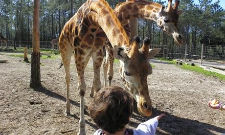 Badoca Safari Park — Vila Nova de Santo André: bilhete para 1, 2 ou 4 pessoas desde 12,95€