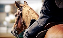 $39 for Two Basic Western-Style Horse-Riding Lessons at Serenity Stables & Event Facility ($80 Value)