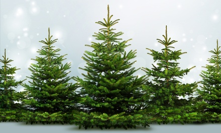 One 6- to 7-Foot Fraser Fir or 7-Foot Douglas Fir Christmas Tree at Edgewater Tree Barn (44% Off)