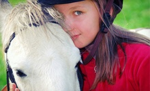 1 or 3 60-Minute Horseback-Riding Lessons or a One-Day Kids' Riding Camp at Jupiter Equestrian Center (Up to 59% Off)