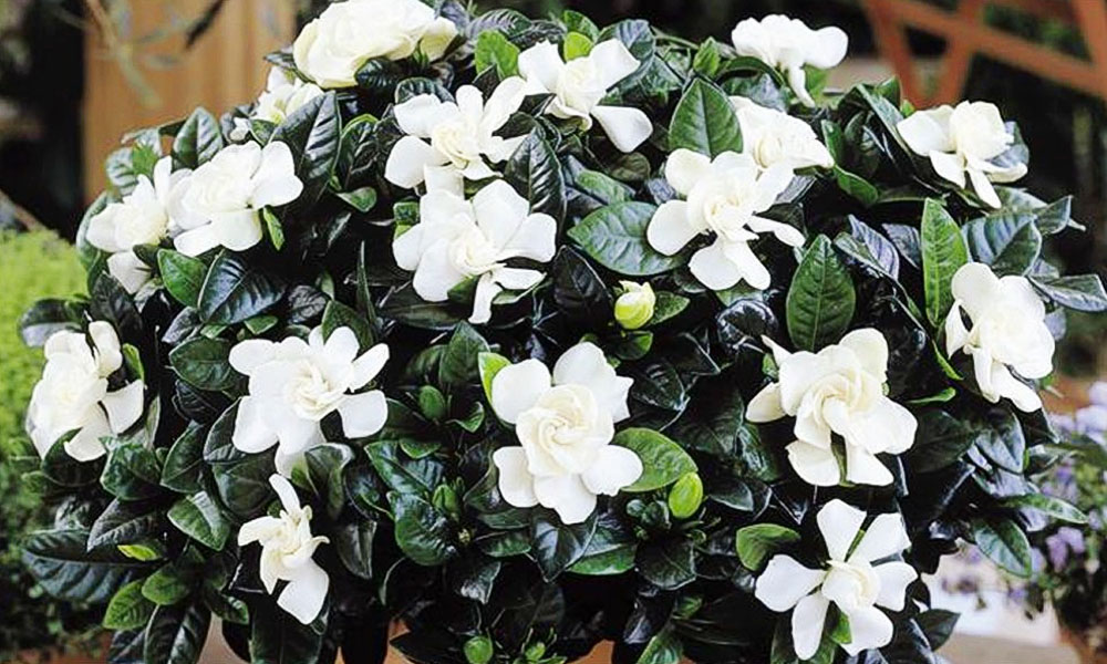 Indoor plants with flowers all year round round designs indoor plants with flowers all year round designs mightylinksfo
