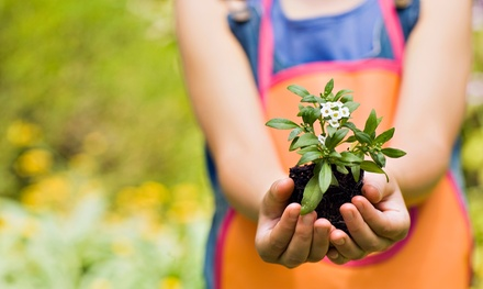 One- or Three-Hour Organic Gardening Class for One or Two at Organically You (Up to 43% Off)