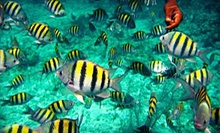 Morning Snorkeling Trip with Gear Rentals for One or Two from Reef Roamer and Quicksilver Catamarans (Up to 51% Off)