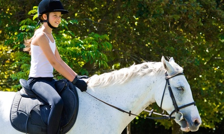 One or Two Riding Lessons or Guided Trail Ride at Never Ending Farm in Pinckney (Up to 56% Off). 4 Options.