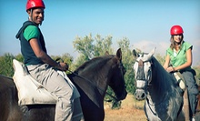 $69 for a Package of Five Group Horseback-Riding Lessons at Nova Quarter Horses (Up to $165 Value)