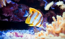 Pet Fish and Aquarium Supplies and Maintenance at Fish Emporium Plus (Up to 52% Off). Two Options Available.