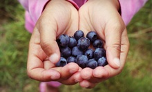 $10 for $20 Worth of Pick-Your-Own Blueberries at VanderHelm Farms
