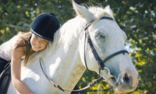 One or Three 60-Minute Private Horseback-Riding Lessons at Family Horse Ranch &amp; Rescue (Up to 53% Off)