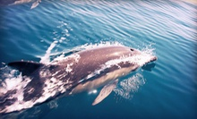 Wildlife Tour for One or Two or Private Charter (Up to 53% Off)