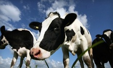 Dairy-Farm Tour for Four or Eight at Kreider Farms (Up to 54% Off)