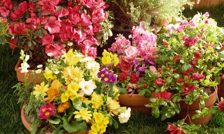 Plants and Gardening Supplies at McDonnell Horticulture Inc. (Up to 51% Off). Two Options Available.
