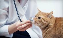 Veterinary Exam and Vaccinations for a Dog or Cat, or Microchip for One Pet at Wilkinson Animal Hospital (Up to 58% Off)