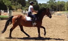 One or Three 60-Minute Private Horseback-Riding Lessons at Nighthorse Farm (Up to 58% Off)