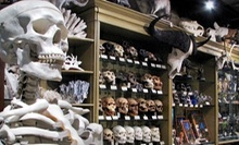 $10 for $20 Worth of Artifacts, Curiosities, and Quirky Home Decor at The Evolution Store