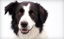 $20 for Veterinary Exam with Blood Sample and Heartworm Test at Banfield Pet Hospital ($78.50 Value)