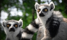 Lemurs Live! or Walking with Lemurs Experience at Duke Lemur Center (Up to Half Off)