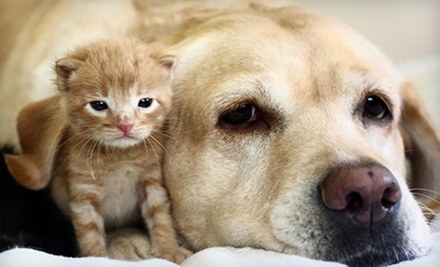 Pet Boarding, or a Vet Exam for a Puppy or Kitten or an Adult Pet at Homestead Animal Hospital (Up to 62% Off)