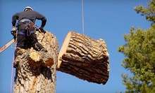 $75 for Up to Three Man Hours of Tree Services from Urban Forest Pro (Up to $225 Value)