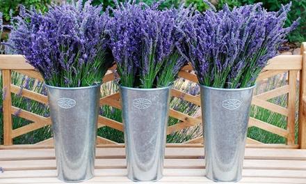 Admission for Two or Four to the Red Rock Lavender Festival with Pick-Your-Own Lavender Bouquets (Up to 54% Off)