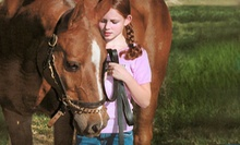 Two or Four Private Horseback-Riding Lessons at Timbermist Farm (Up to 55% Off)