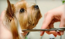 Dog Grooming for a Small, Medium, or Large Dog at Four Paws Spa (Up to 56% Off)