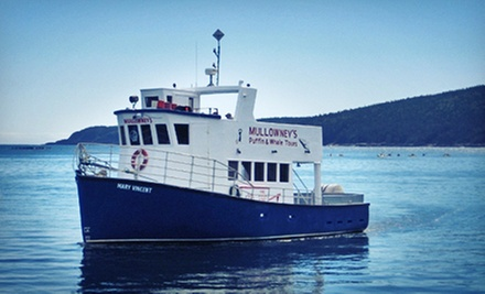 Puffin- and Whale-Watching Tour for Two or Four from Mullowney's Boat Tours (Up to Half Off)