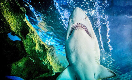 Groupon For Greater Cleveland Aquarium Sisters Shopping