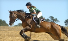 One or Three Private Horseback-Riding Lessons at Zia Ranch Horsemanship Program (Up to 52% Off)