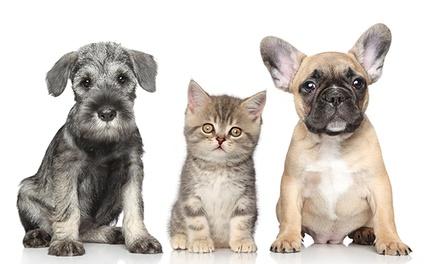Perfect Pet — Alcântara: spa com banho e tosquia para animal de estimação desde 14,90€