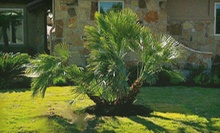 Trees, Plants, Monster Palms, and More at MBP Nursery and Landscaping (Half Off). Two Options Available.
