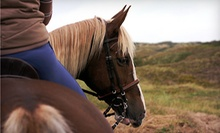 One-Hour Horseback Trail Ride for Two or Four from Wolfshohl Horse Training (Up to 62% Off)