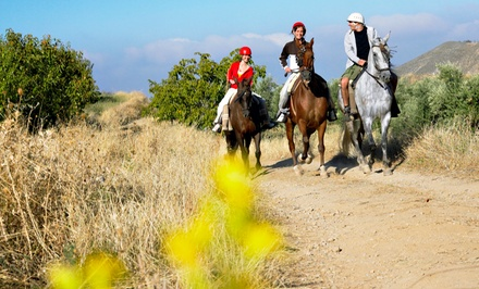 60-Minute Horseback Trail Riding for One, Two, or Four at Pure Horse Play (Up to 52% Off)