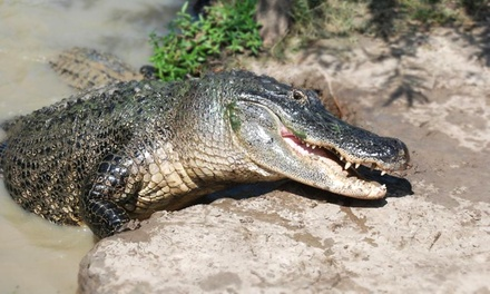 East Texas Gators and Wildlife Park Admission for Two, Four, or Six (Up to Half Off)