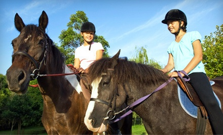 One, Three, or Five One-Hour Private Horseback-Riding Lessons at Earthquake Arabians (Up to 63% Off)