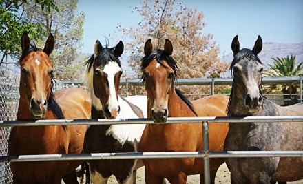 One, Two, or Four 30-Minute Horseback-Riding Lessons at Paradise Ranch (Up to 67% Off)