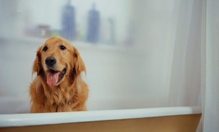 One or Five Days of Doggy Daycare or One Basic Doggy Bath at Camp Bow Wow (Up to 58% Off)