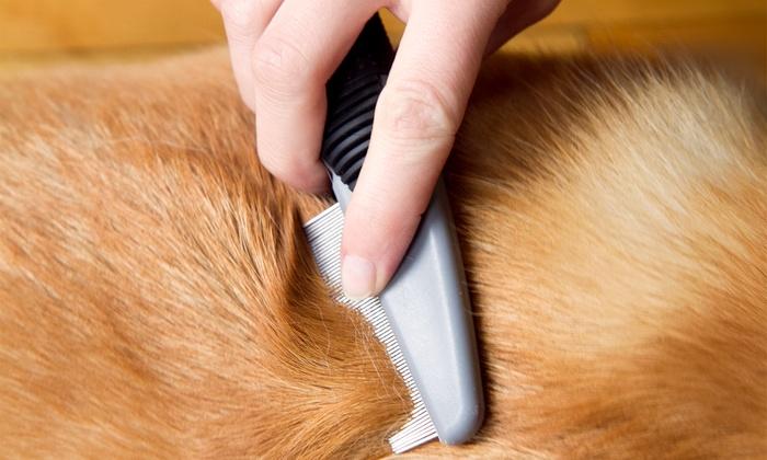Pet grooming salon perfect paws pet grooming groupon for A perfect pet salon