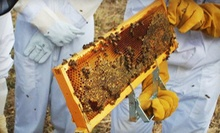 Three-Hour Introductory Beekeeping Class for One or Two at Round Rock Honey (Up to 68% Off)
