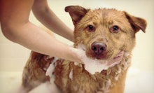 $15 for Two Self-Serve Dog Washes at Kosmo's Doghouse (Up to $34 Value)