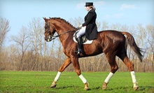 One or Two Horseback-Riding Lessons or One Month of Horse Training from Regal Equestrian (Up to 55% Off)