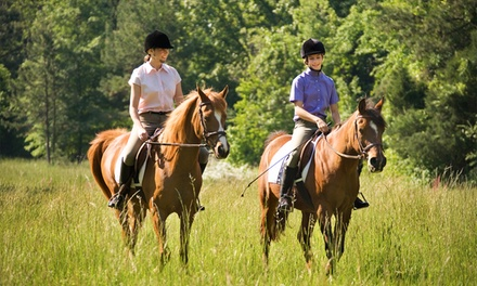 One-Hour Guided Trail Ride for Two or Four at Hollow Tree Ranch (Up to 32% Off)