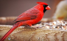 $15 for $30 Worth of Bird-Feeding and Nature Supplies at Wild Birds Unlimited