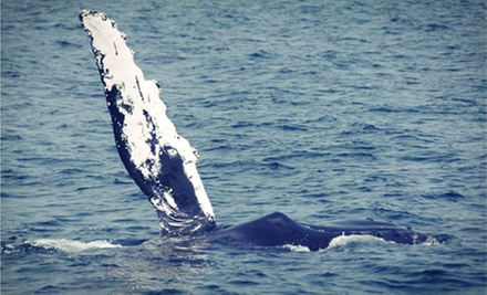 Three-Hour Whale- and Dolphin-Watching Tour for Two or Four from Starlight Fleet (Up to 53% Off)