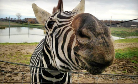 African Safari Wildlife Park Visit for One or Four (Up to 64% Off). Three Options Available.