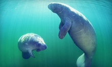 $26 for Three-Hour Manatee Snorkeling Tour from Adventure Diving ($55 Value)
