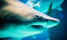 Adult or Child's Admission to North Carolina Aquarium at Pine Knoll Shores (Up to Half Off)