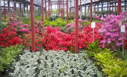 Gardening Essentials or Plants at Stringer Nursery (Half Off)