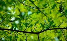 $25 for $50 Worth of Plants and Trees at Pixies Gardens